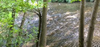 レッドウッドの森の川辺で水遊び