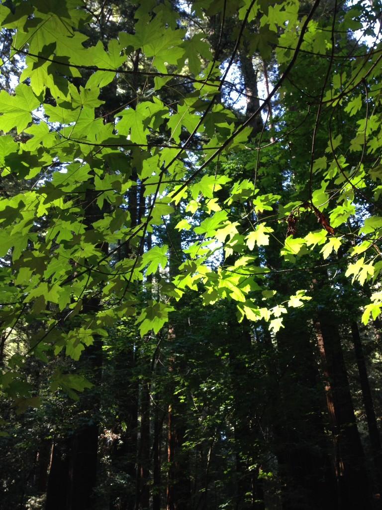 木々の美しい季節