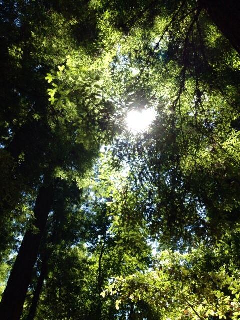 夏至 太陽の光が沢山降り注ぐ日