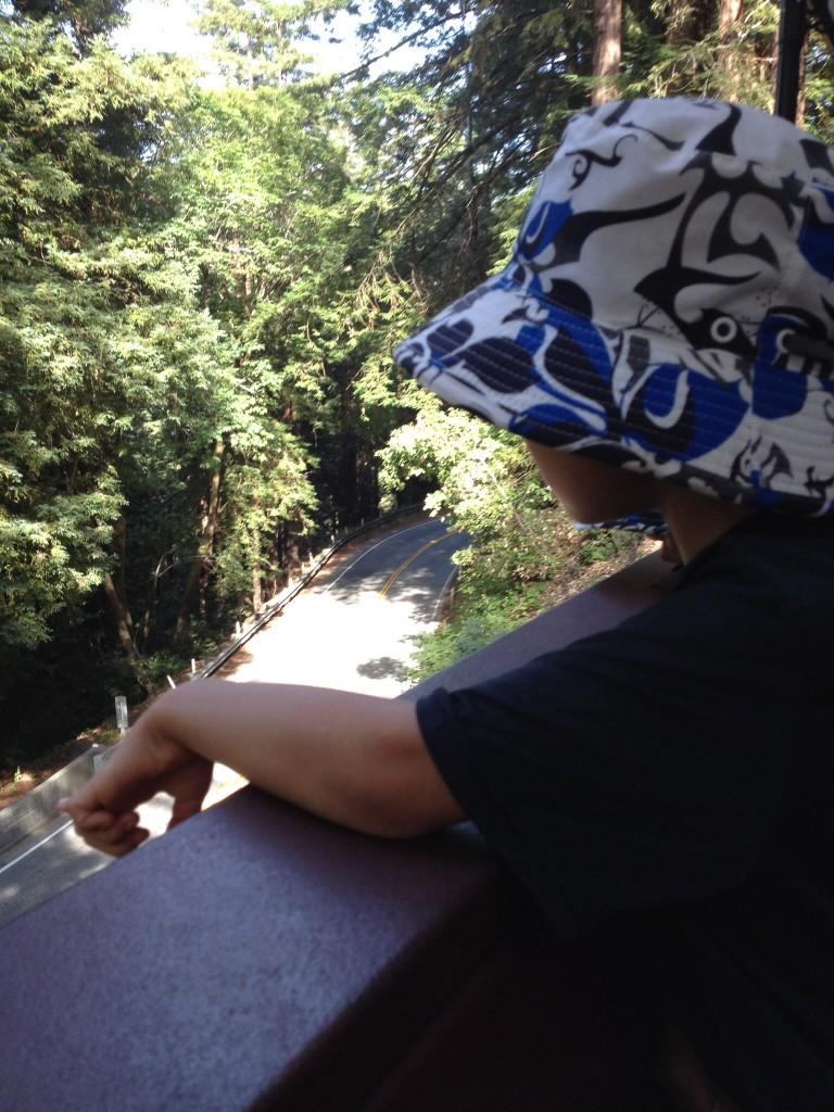 レッドウッドの森からの電車の旅