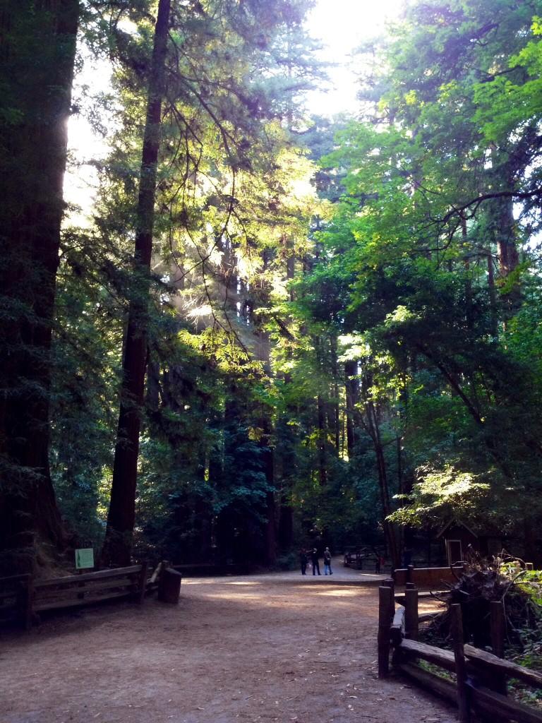 レッドウッドの森の夕暮れ