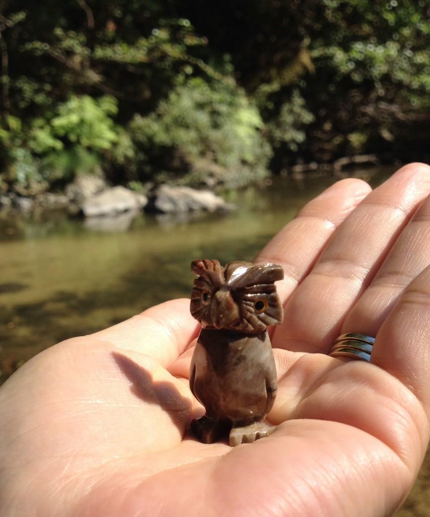 レッドウッドの森のフクロウ
