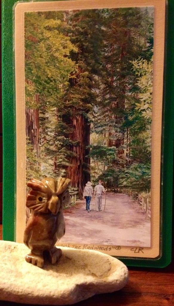 レッドウッドの森からプレゼント企画