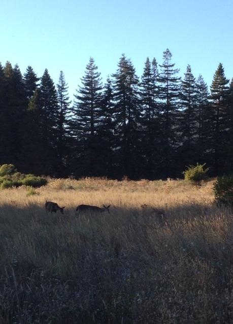 レッドウッドの森に住む野生動物