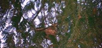 ハミングバードの巣