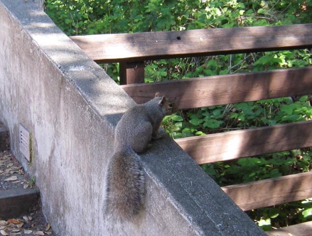 レッドウッドの森の中での瞑想時間