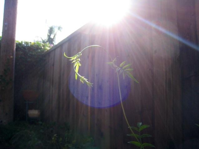 ガーデンフェアリーと過ごす朝