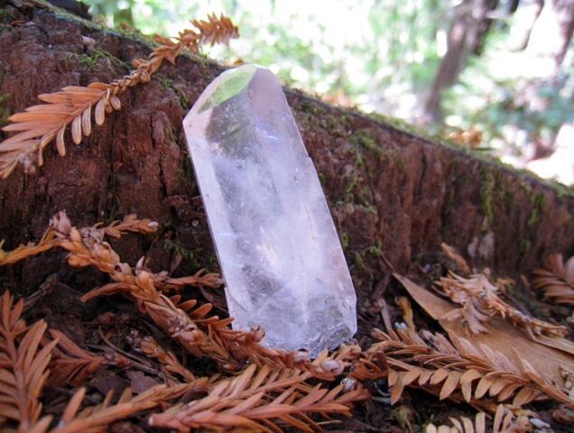 森のエネルギー