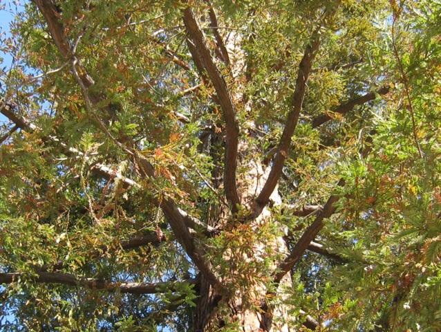 木の精霊のエネルギー