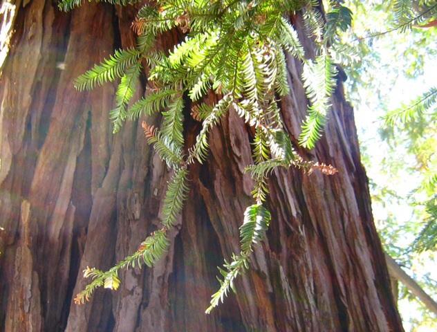 木のエネルギー