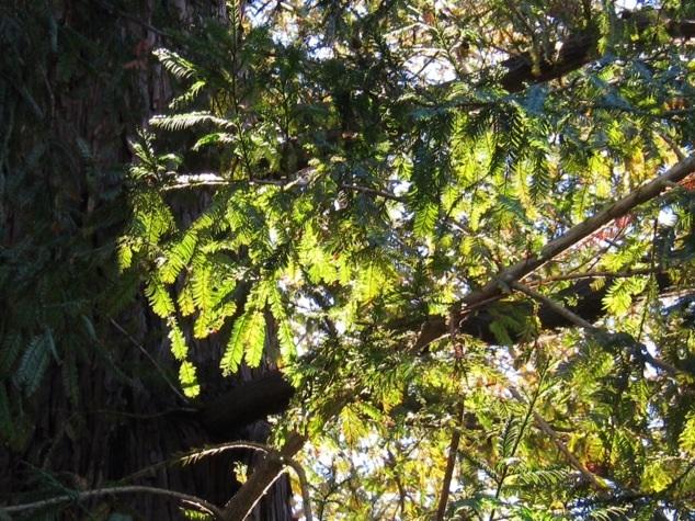 木のオラクルカード