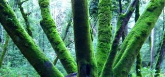 今年最初の満月の日のレッドウッドの森