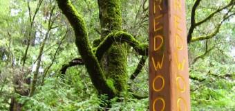 森のエネルギーを運んで来てくれるクリスタル