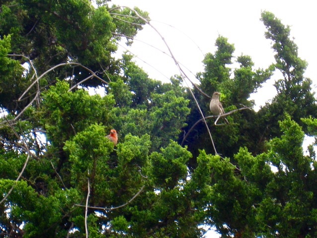 庭先の鳥達