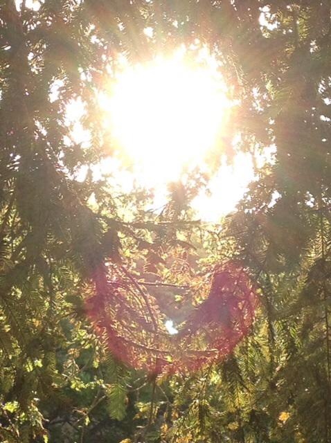 レッドウッドの木に住む妖精