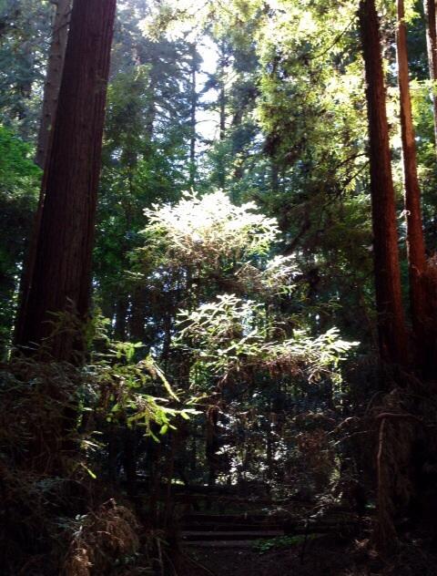 森に住むエネルギー体