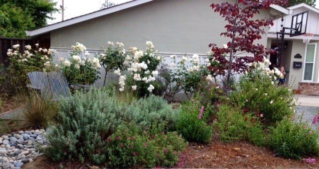 環境に優しい庭作り