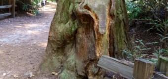 木に宿るエネルギー体たち