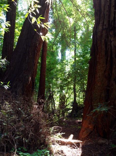 森のエネルギー体