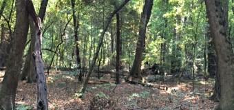 満月明けのレッドウッドの森