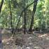 レッドウッドの森