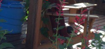 鳥のさえずりが響き渡る我が家の庭