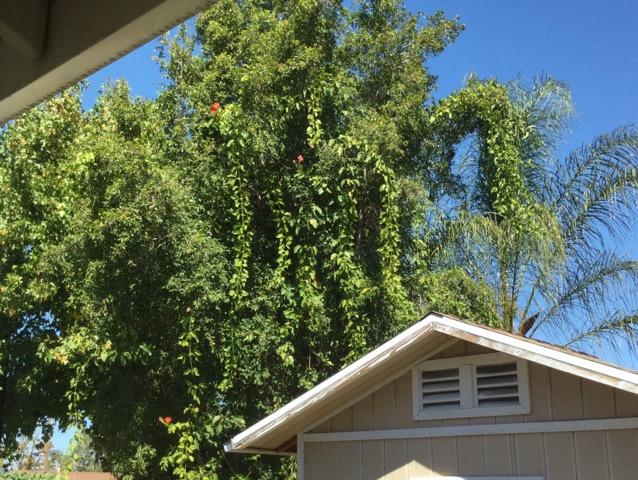 我が家の庭の風景