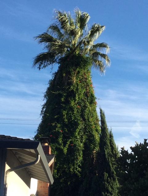 パームツリーのクリスマスツリー