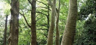 大きな木の下で行われる素敵なワーク