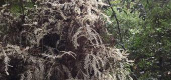 森の中を流れる神秘的なエネルギー
