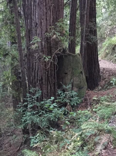 レムリアの森