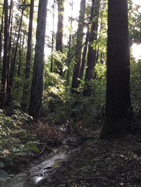 森の中を流れる水のエネルギー