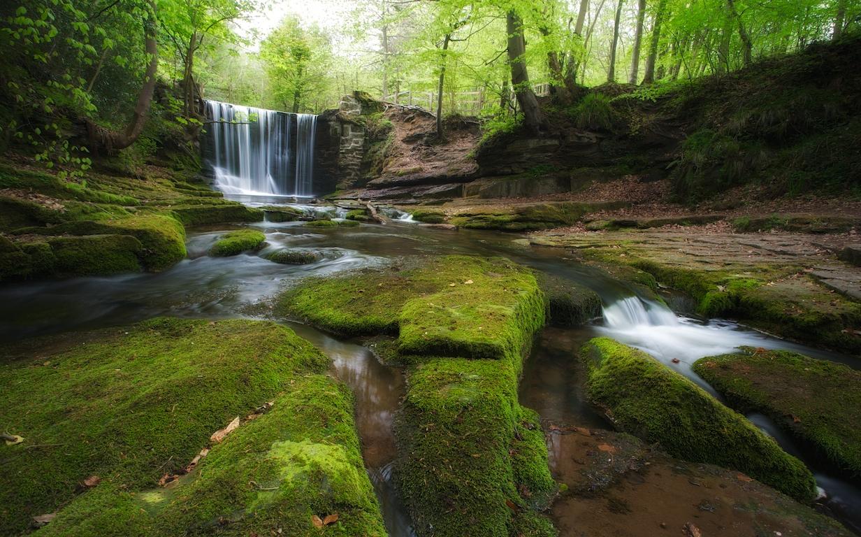 ウェールズ地方の森