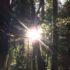 嵐明けのレッドウッドの森