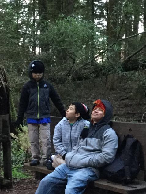 レッドウッドの森散策