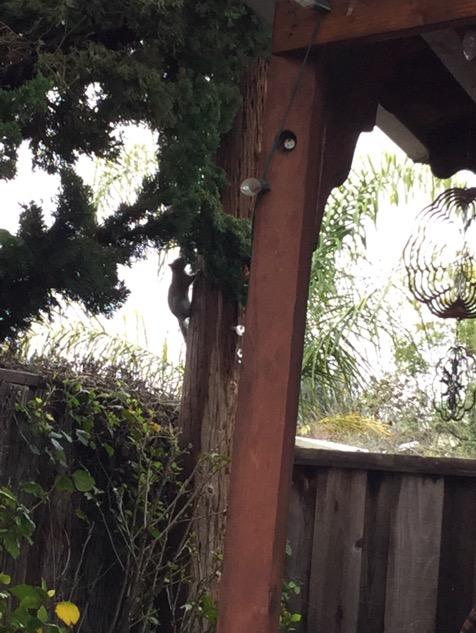 雨上がりの我が家の庭