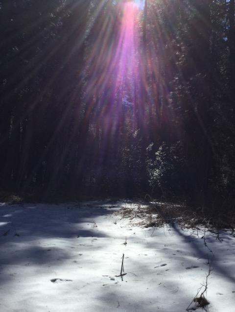 冬のヨセミテ