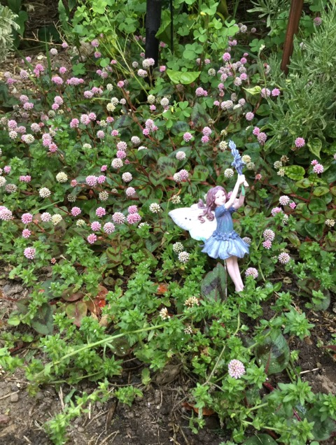 ハミングバード遊びにそして妖精達が憩う庭