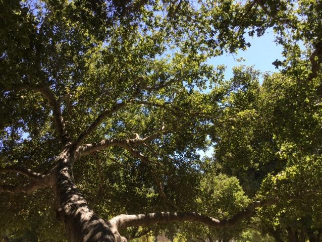 カルフォルニアの森のエネルギー