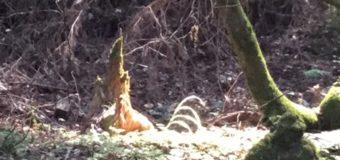 レッドウッドの森の大地のエネルギー