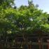 坂本の日吉大社