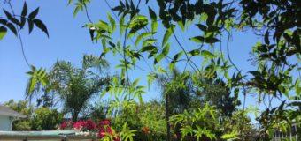 植物界から受け取るエネルギー