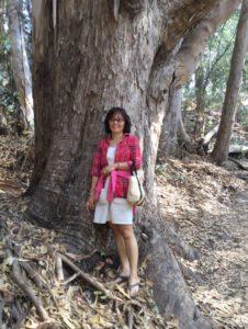 モナークバタフライの森