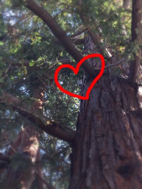 街中にやってきた啄木鳥