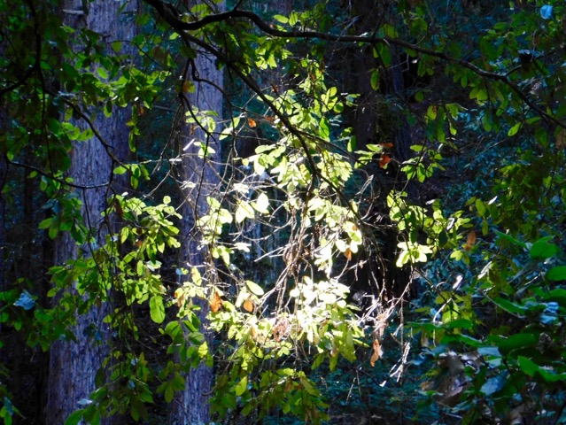 森の中の様子