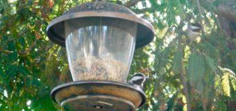 小鳥達も大好きなレッドウッドツリーの精霊達