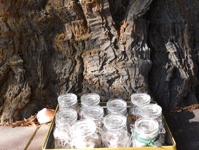 レッドウッドツリーのモイストポプリ