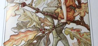 森 そして樹木の王 イングリッシュオークツリー
