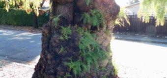 木の精霊からのメッセージ