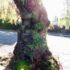 お氣に入りの木